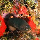 Golden Tail Eel by lifevibrations