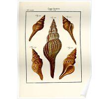 Neues systematisches Conchylien-Cabinet - 250 Poster
