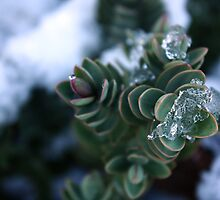 Icy shrubbery. by kkimi88