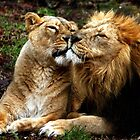 Nuzzling lions. by kkimi88