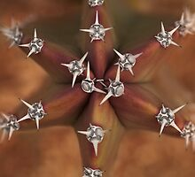 Jeweled Star by Richard G Witham