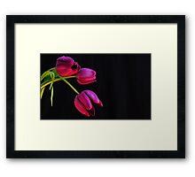 purple tulips Framed Print