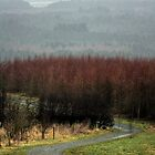 A fork in the road, atop Old Pale, Delamere. by kkimi88