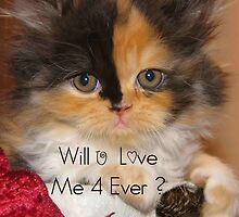 Will U Love Me 4 Ever ? by Julie Everhart