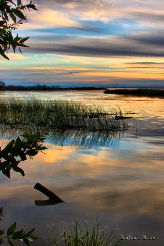 Wetland Sunset by Barbara  Brown