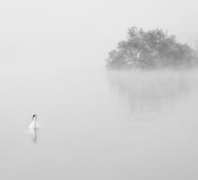 Swan in the early morning mist 3 by Kim  Ayres