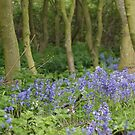 Bluebell Wood by Moonlake