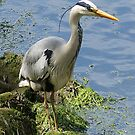 Heron Thaughts by Moonlake