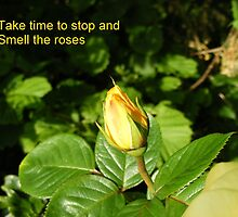 Stop and Smell the Roses by Gerry  Temple