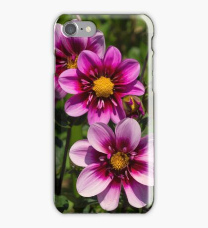 Dahlia Trio iPhone Case/Skin