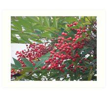 Berry Tree Art Print