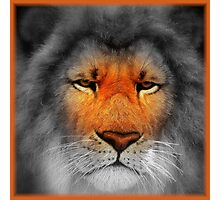 Be A Lion Photographic Print