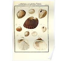Neues systematisches Conchylien-Cabinet - 352 Poster