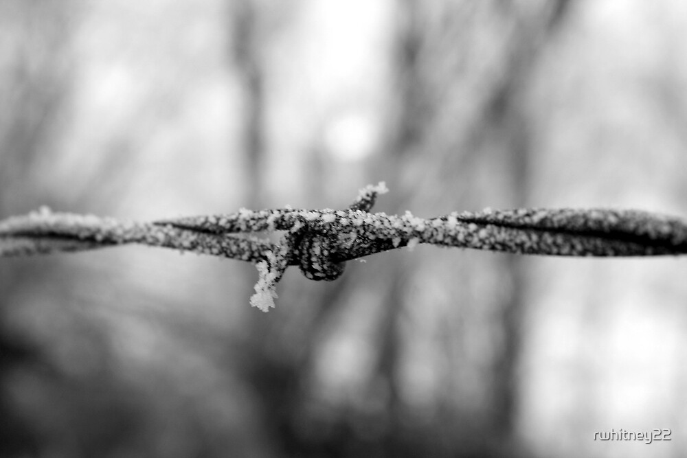 Frost on Barbed Wire by rwhitney22