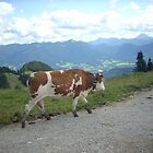 Walking Cow by Gina Livingston