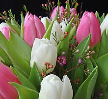 I love tulips by Paola Svensson