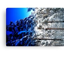 Seasons of white and blue Canvas Print