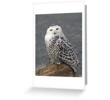 Owl on the Rocks - Snowy Owl Greeting Card