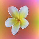 Tropical Rainbow Frangipani / Plumeria by Melissa Park
