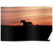 Equine Sunset Poster