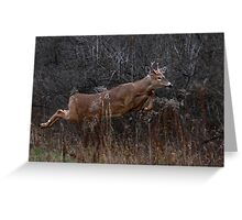 Into the Woods - White-tailed Deer Greeting Card