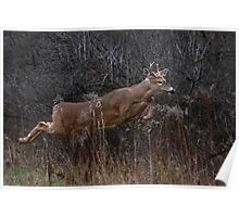 Into the Woods - White-tailed Deer Poster