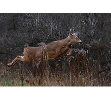 Into the Woods - White-tailed Deer Photographic Print