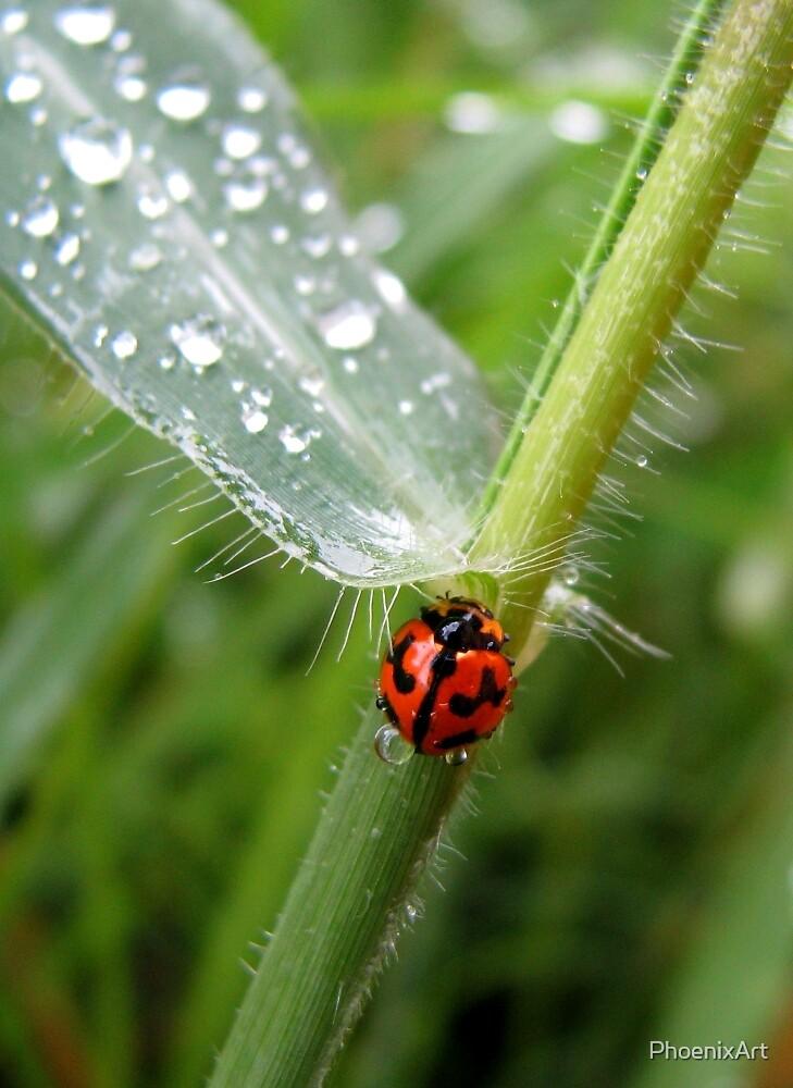 Ladybug Drops by PhoenixArt