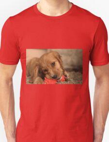 Golden Cocker Spaniel Puppy T-Shirt