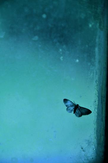 Butterfly II by Valerie Rosen
