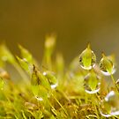 moss and raindrops by Mike Finley