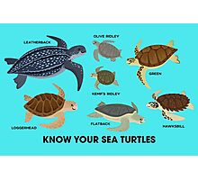 Know Your Sea Turtles Photographic Print