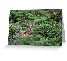 Fawn - White-tailed Deer Greeting Card