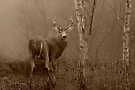 White-tailed Deer Buck in Sepia by Jim Cumming