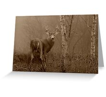 White-tailed Deer Buck in Sepia Greeting Card
