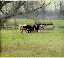 Cattle Feeding -Smithville Ontario  by David Buckle