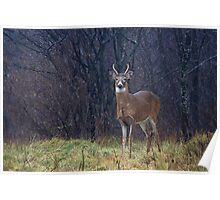 Young Buck in Snow Poster