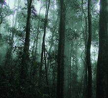 Forest in the Mist by mindy23