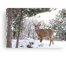 Frosty Buck - White-tailed Buck, Ottawa Canvas Print