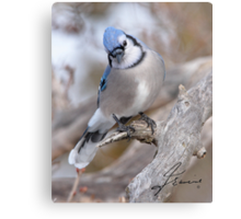 The Inquiring Blue J Metal Print