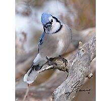 The Inquiring Blue J Photographic Print