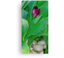 """Boston Tulip"" Canvas Print"