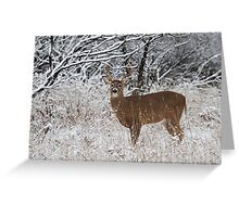 White-tailed Buck in Snow Greeting Card