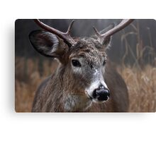 Light from Above - White-tailed deer Metal Print