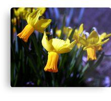 Daffodil Song Metal Print