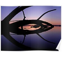 Driftwood Reflection Poster
