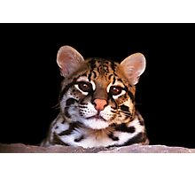 Ocelot - Sonoran Desert Museum in Tucson, Arizona Photographic Print