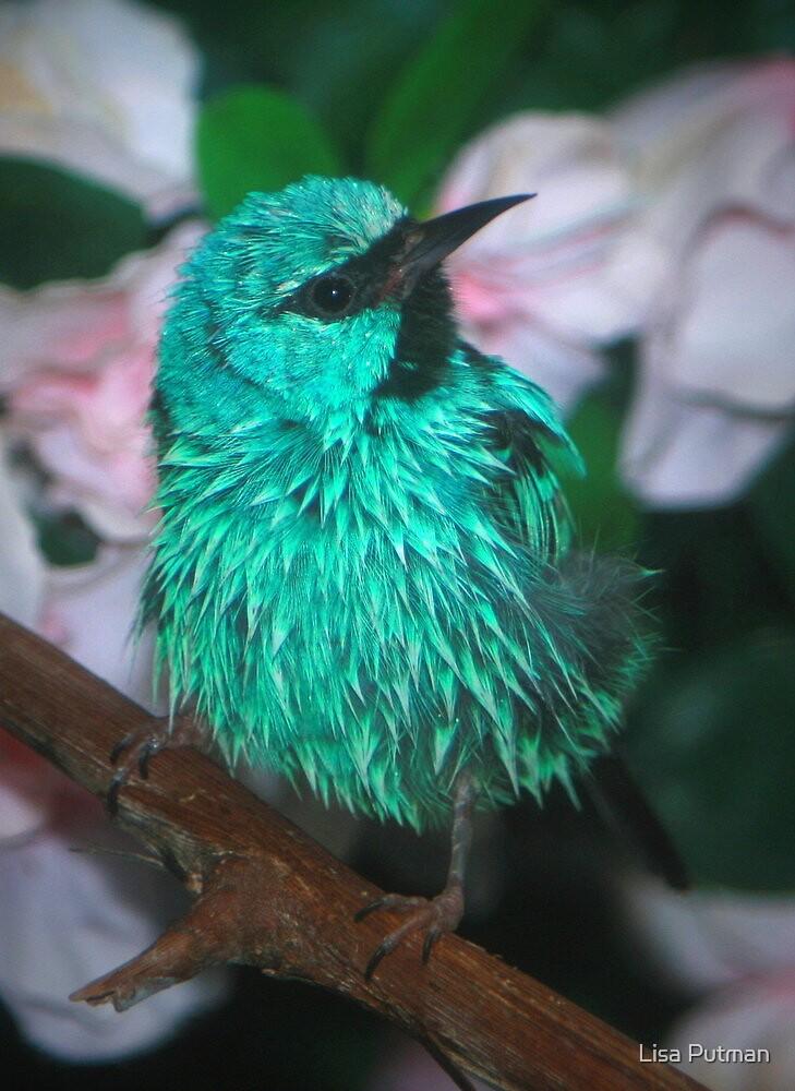 Sweet Little Bird by Lisa G. Putman