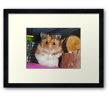 'What are you looking at....?' Framed Print