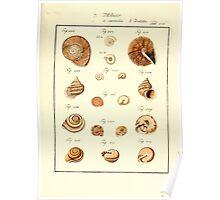 Neues systematisches Conchylien-Cabinet - 389 Poster